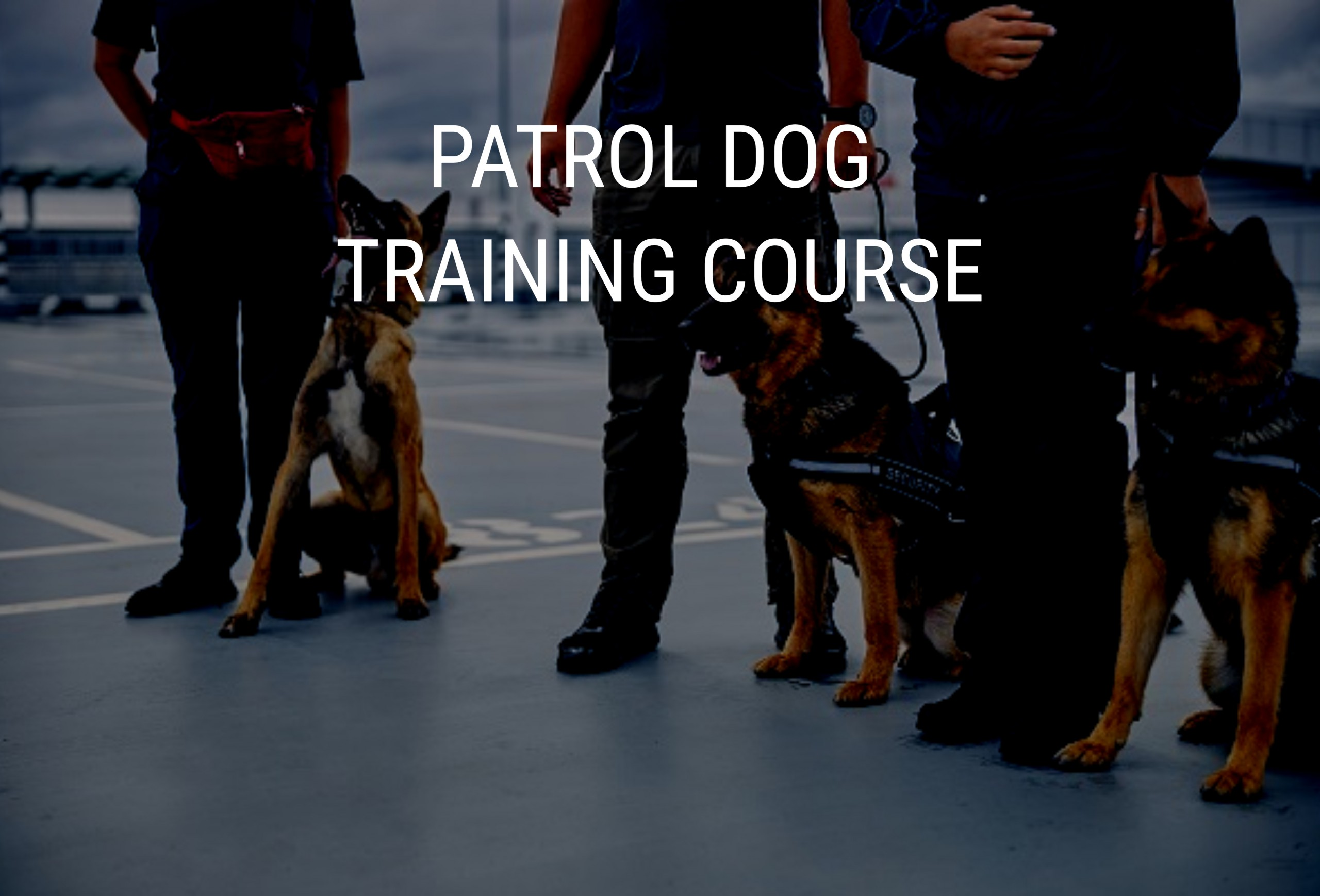 NASDU GP Dog Handler Seurity Training Course